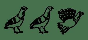 Pigeons Illustration